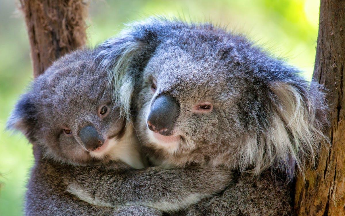 healesville sanctuary admission tickets-1