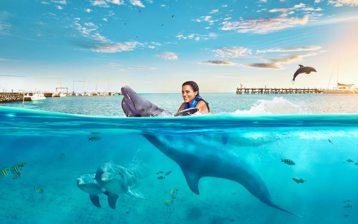 isla mujeres: dolphin encounter with optional royal garrafón reef park -1