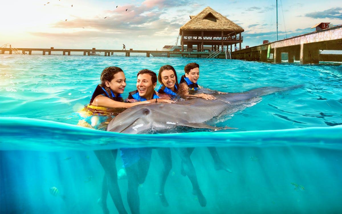 isla mujeres: dolphin swim adventure with optional royal garrafón reef park-1