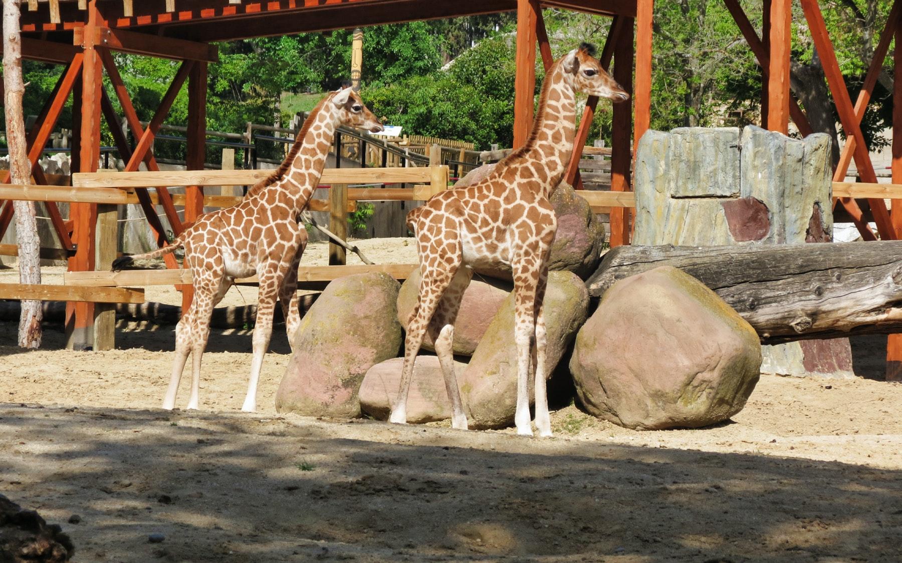 Madrid Aquarium Zoo Tickets