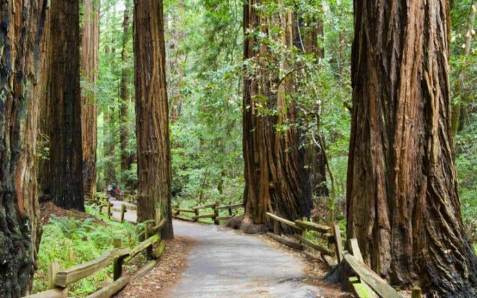 Muir Woods & Sausalito Tour + Golden Gate Bay Cruise