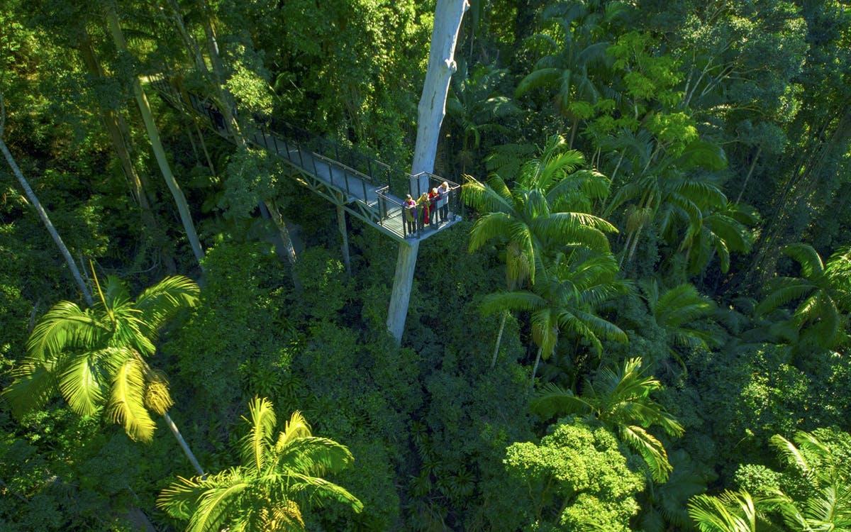 tamborine rainforest skywalk entry tickets-0