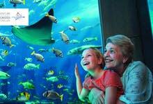 Lost Chambers Aquarium - 3