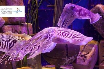 Lost Chambers Aquarium - 2