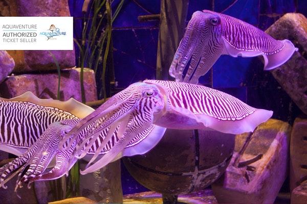 Lost Chambers Aquarium reopening Post Coronavirus