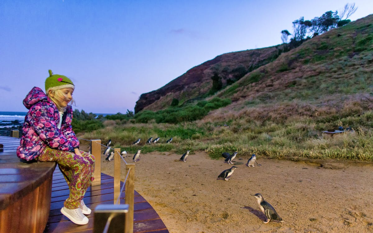 phillip island nature parks penguin parade ticket-1