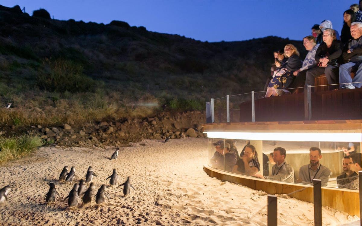 phillip island nature parks penguin parade ticket-0