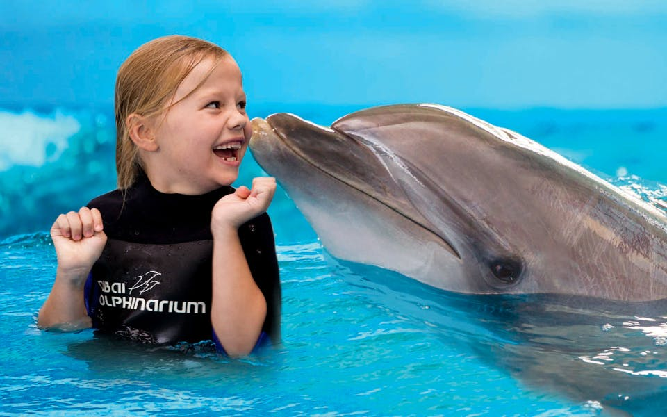 dubai dolphinarium: swimming with dolphins-1