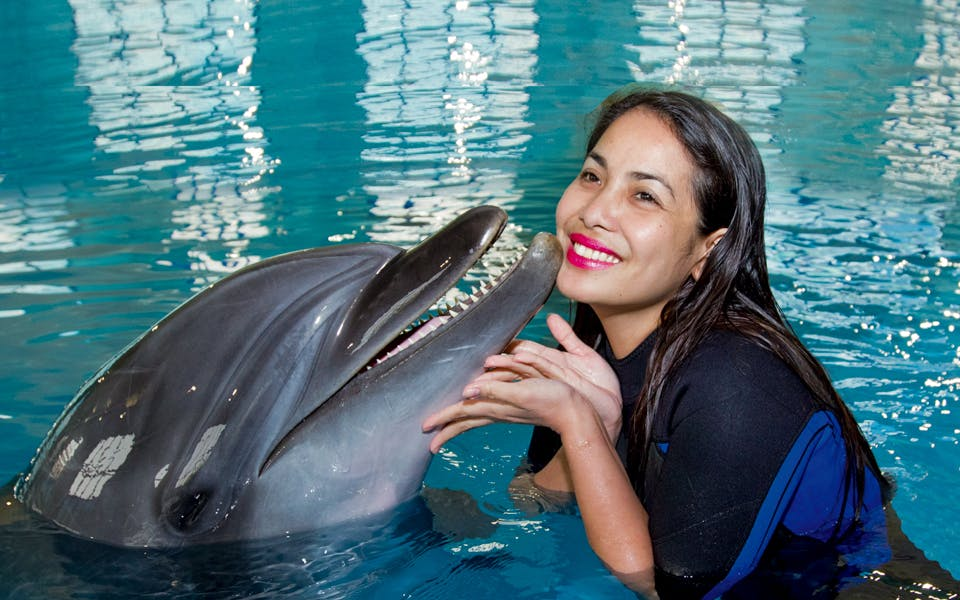 dubai dolphinarium: swimming with dolphins-0
