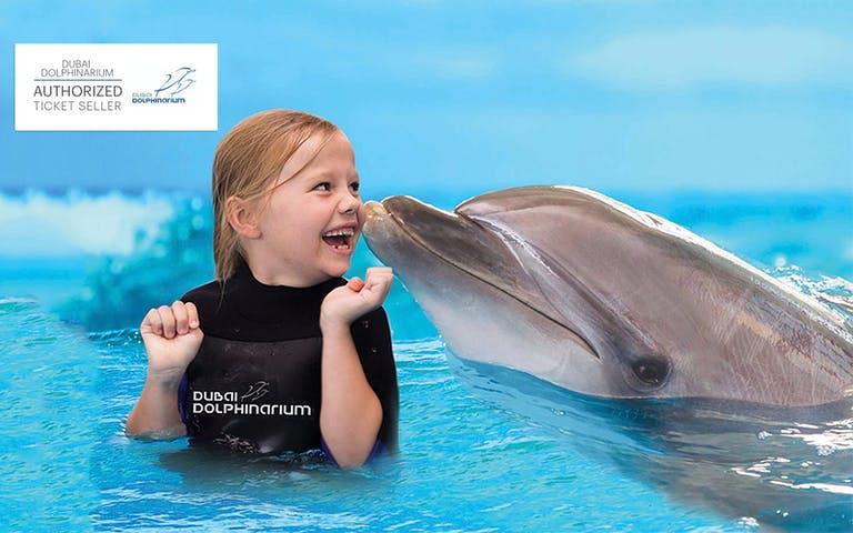 dubai dolphinarium swimming with dolphins dubai tickets headout