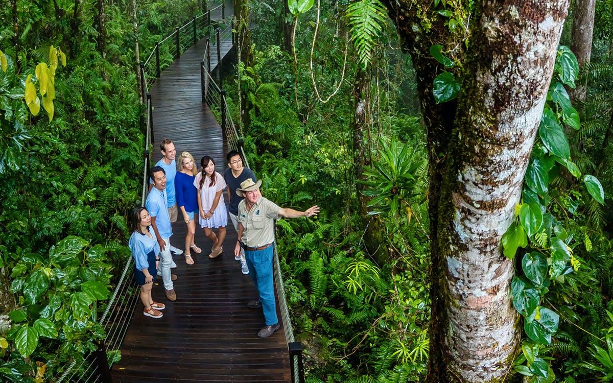 kuranda skyrail rainforest cableway-1