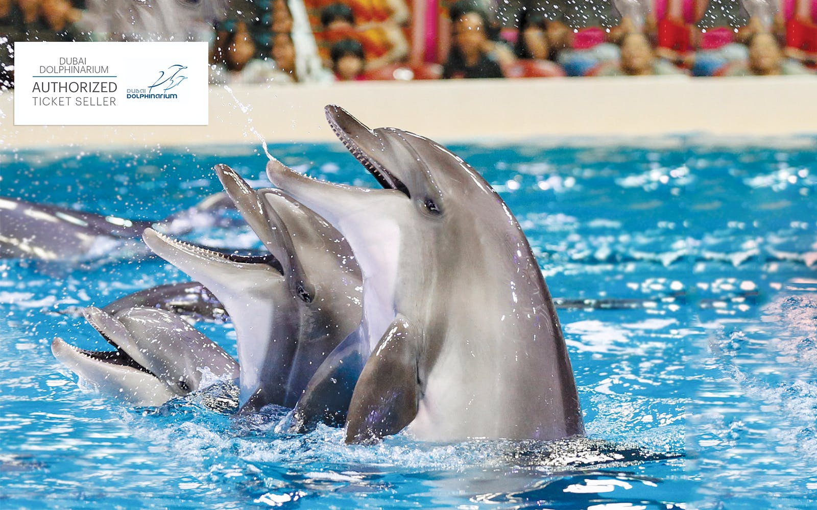Dubai Dolphinarium: Illusion & Dolphin and Seal Show