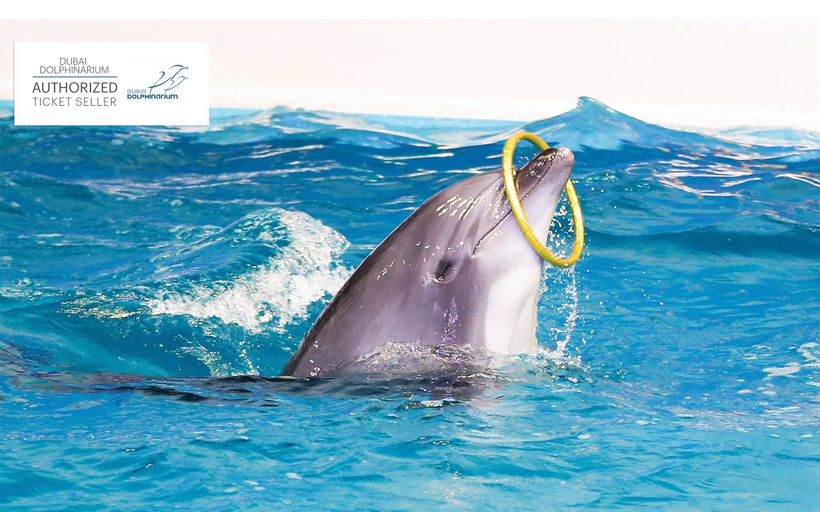 dubai dolphinarium: illusion & dolphin and seal show-3