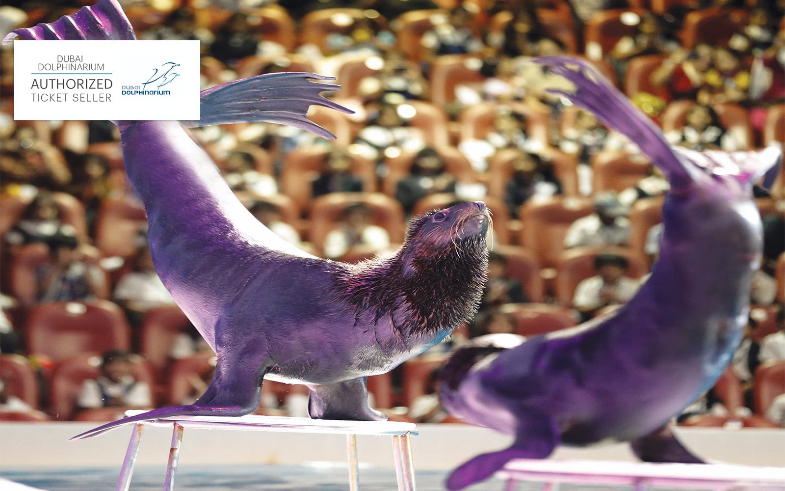 dubai dolphinarium: illusion & dolphin and seal show-2