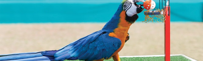dubai-dolphinarium-creek-park-exotic-bird-show