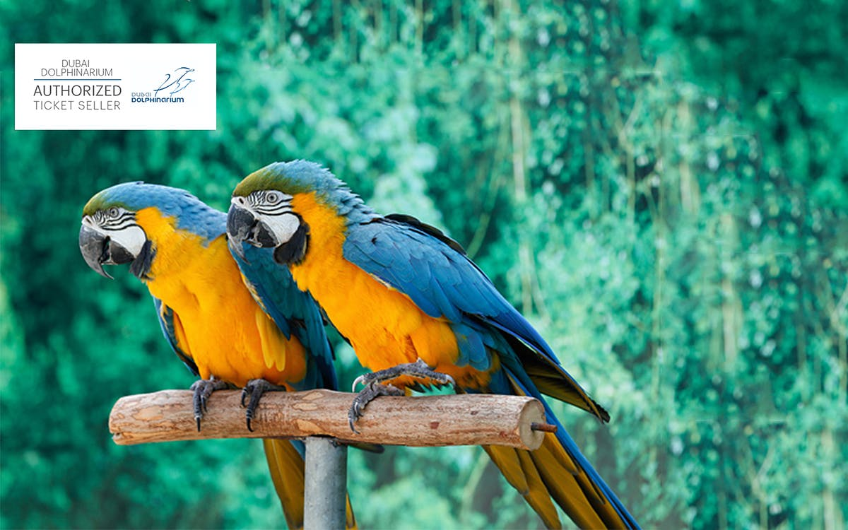 dubai dolphinarium tickets: creek park exotic bird show-1