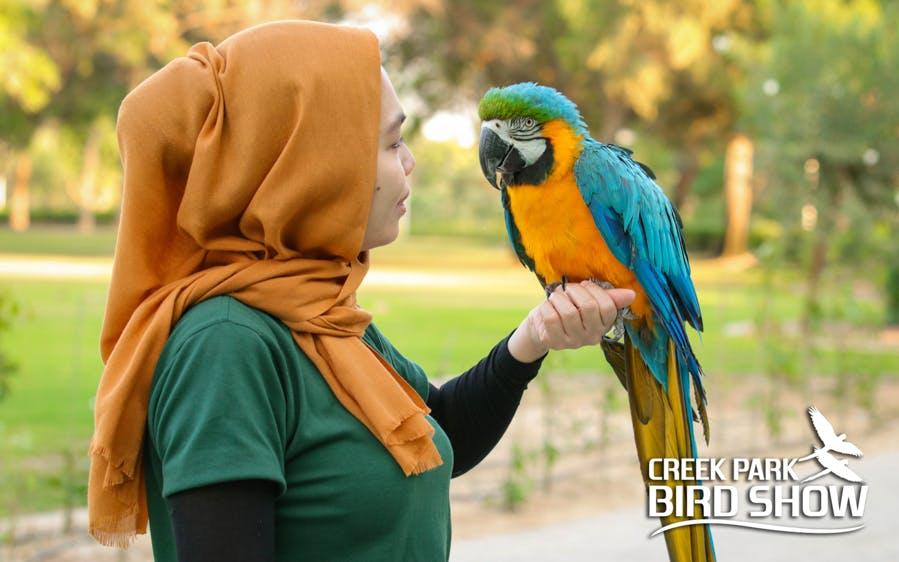 dubai dolphinarium tickets: creek park exotic bird show-1