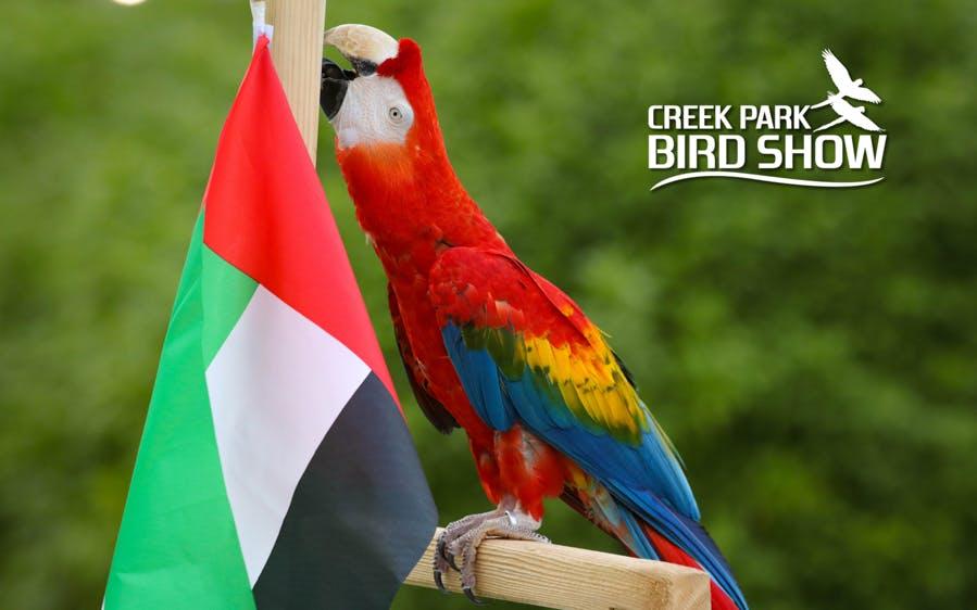 dubai dolphinarium tickets: creek park exotic bird show-0