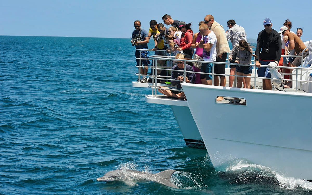 jervis bay dolphin watch eco cruise-1