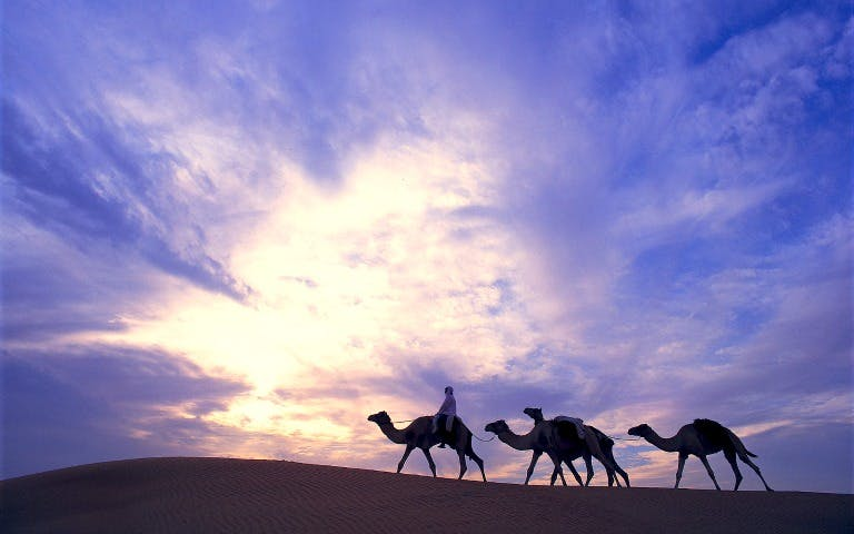morning-desert-safari-sunrise-camels