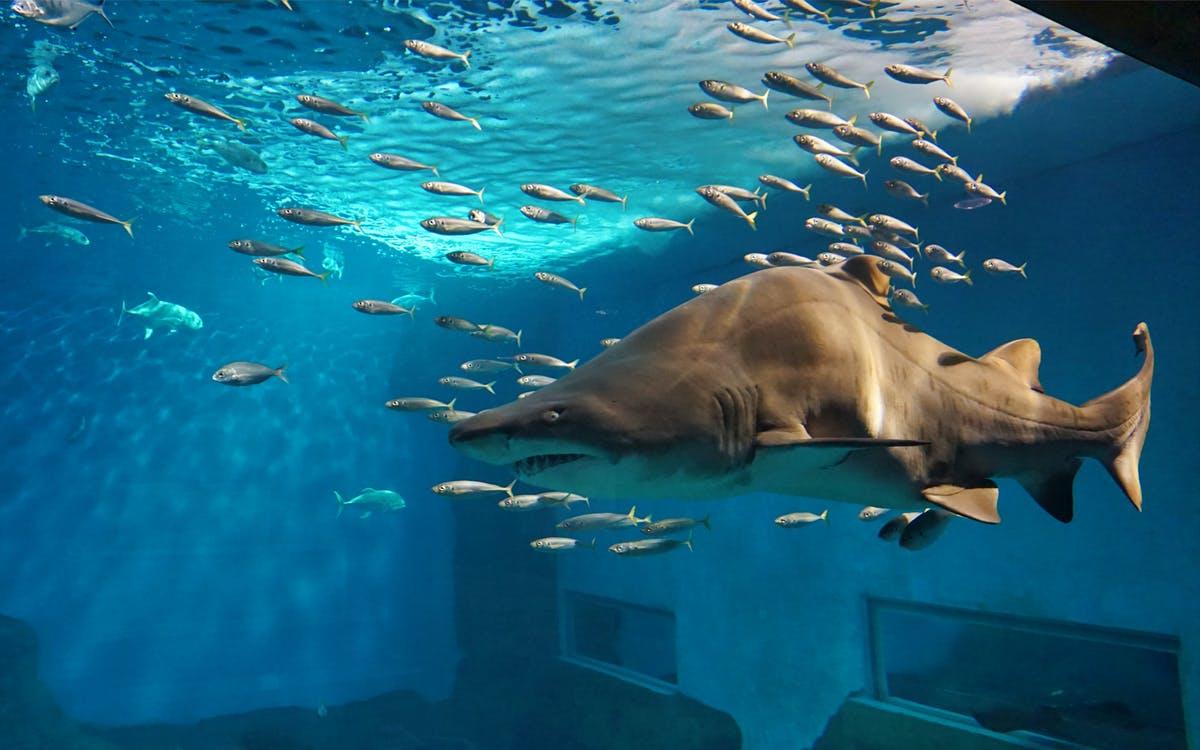 seville aquarium admission tickets-0