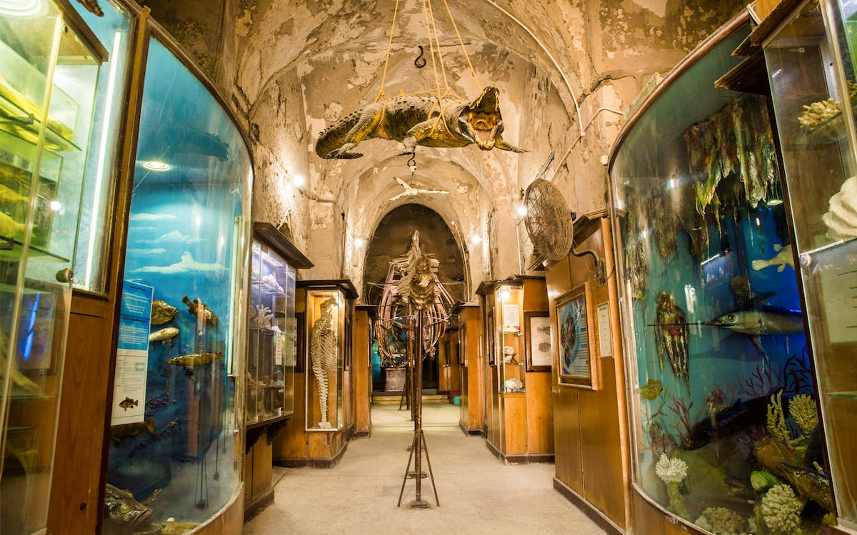 full-day tour of historical alexandria from cairo-0