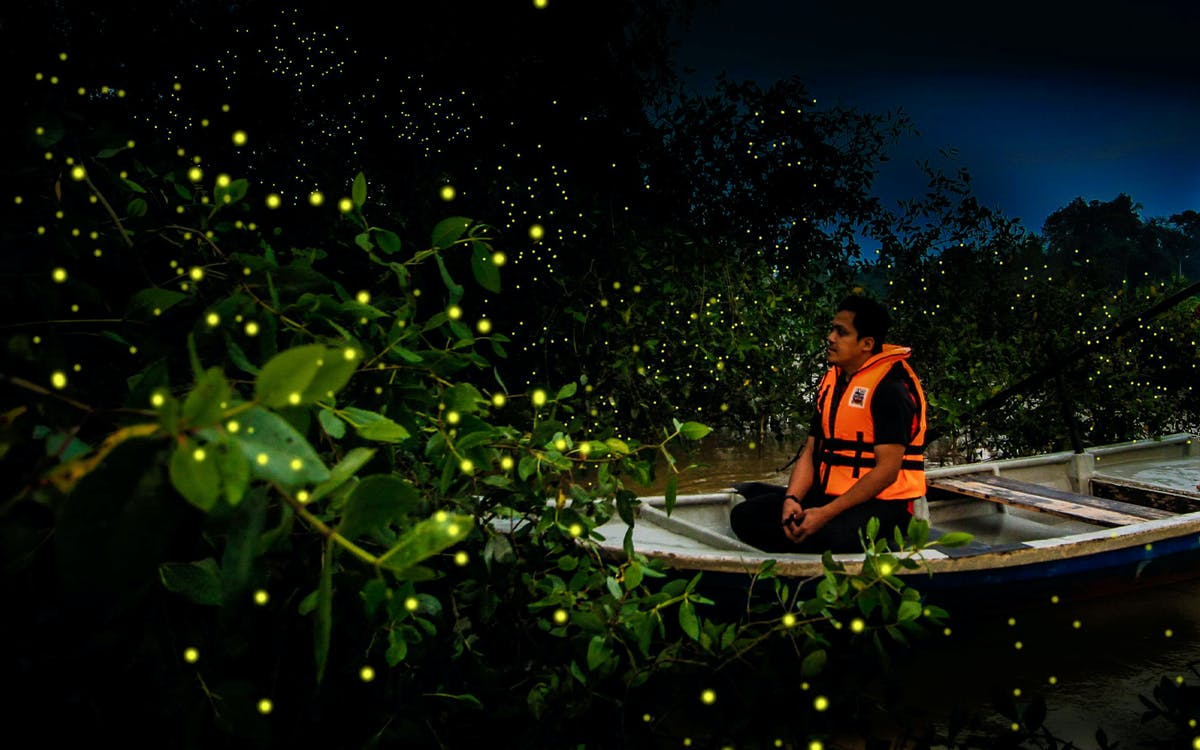 kampung kuantan fireflies park - group tour-0