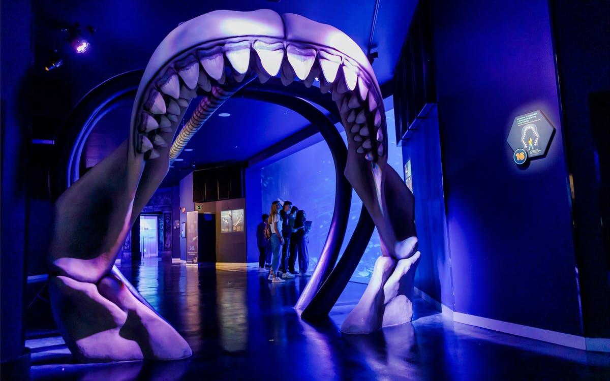 atlantis aquarium madrid: skip the line tickets-0