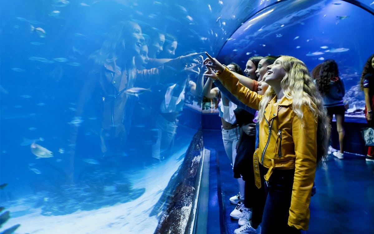 atlantis aquarium madrid: skip the line tickets-1