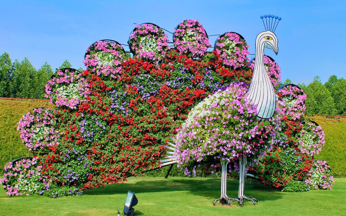 dubai miracle garden tickets-1