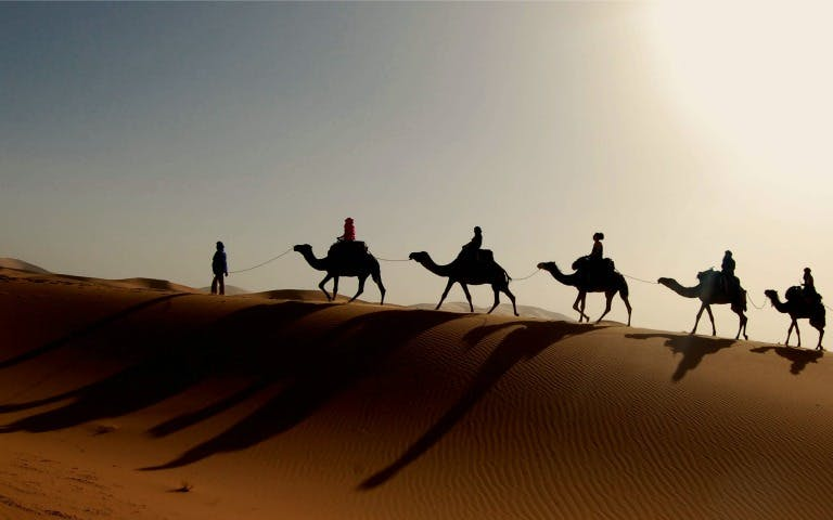 Evening Camel Safari