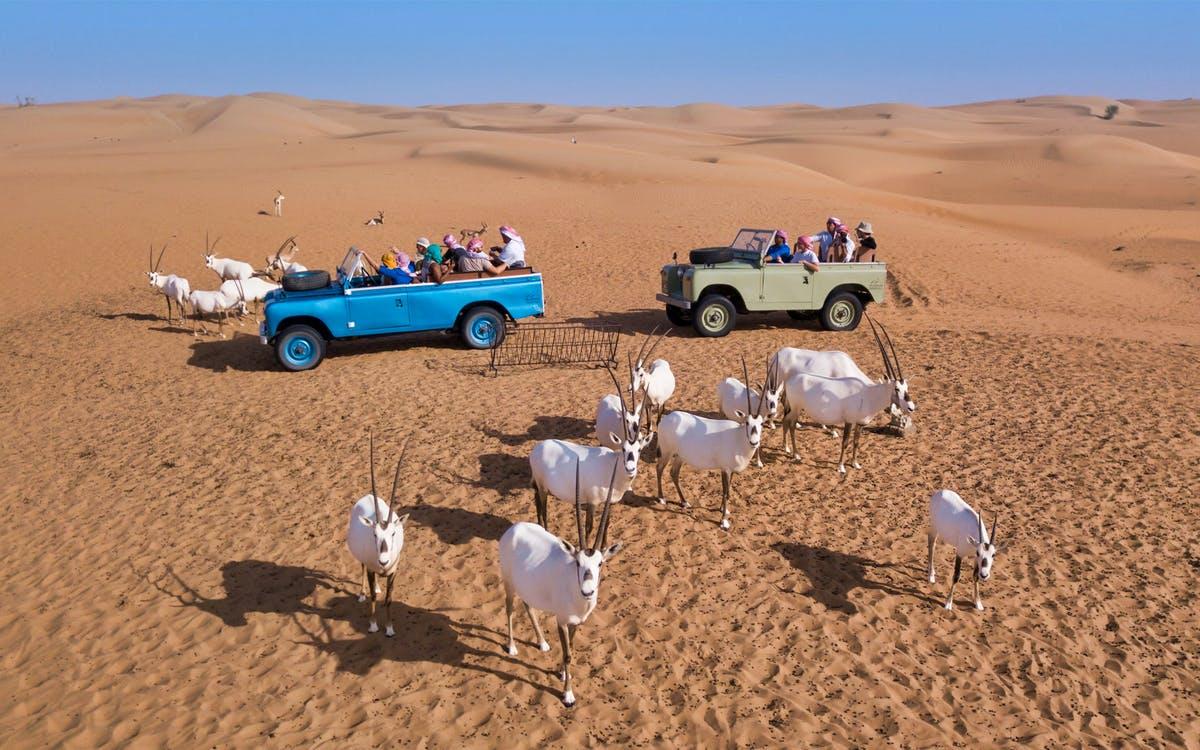platinum heritage - bedouin breakfast and love lakes desert safari-1