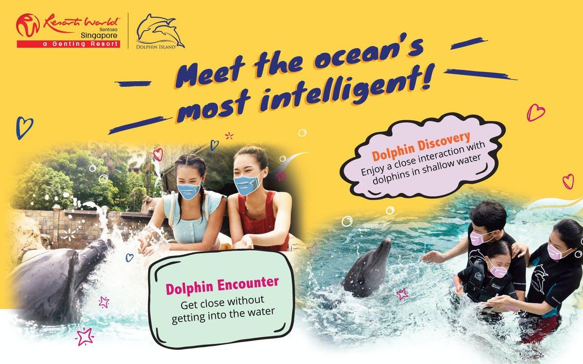 s.e.a. aquarium + dolphin discovery-1