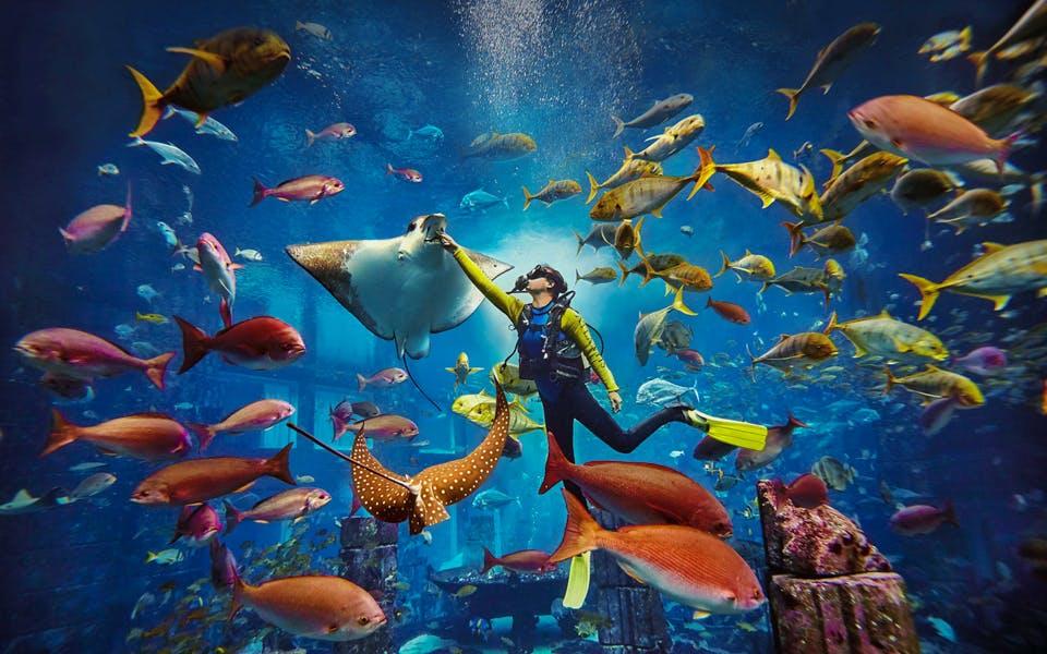 scuba dive at atlantis aquaventure-1