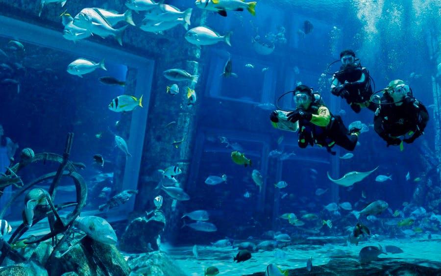 scuba dive at atlantis aquaventure-0