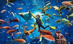 Aquaventure Waterpark tickets - 1