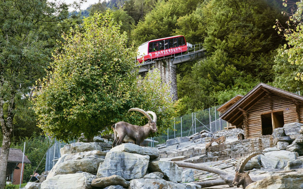 funicular ticket to the harder kulm-0