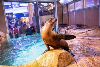 S.E.A. Aquarium singapore