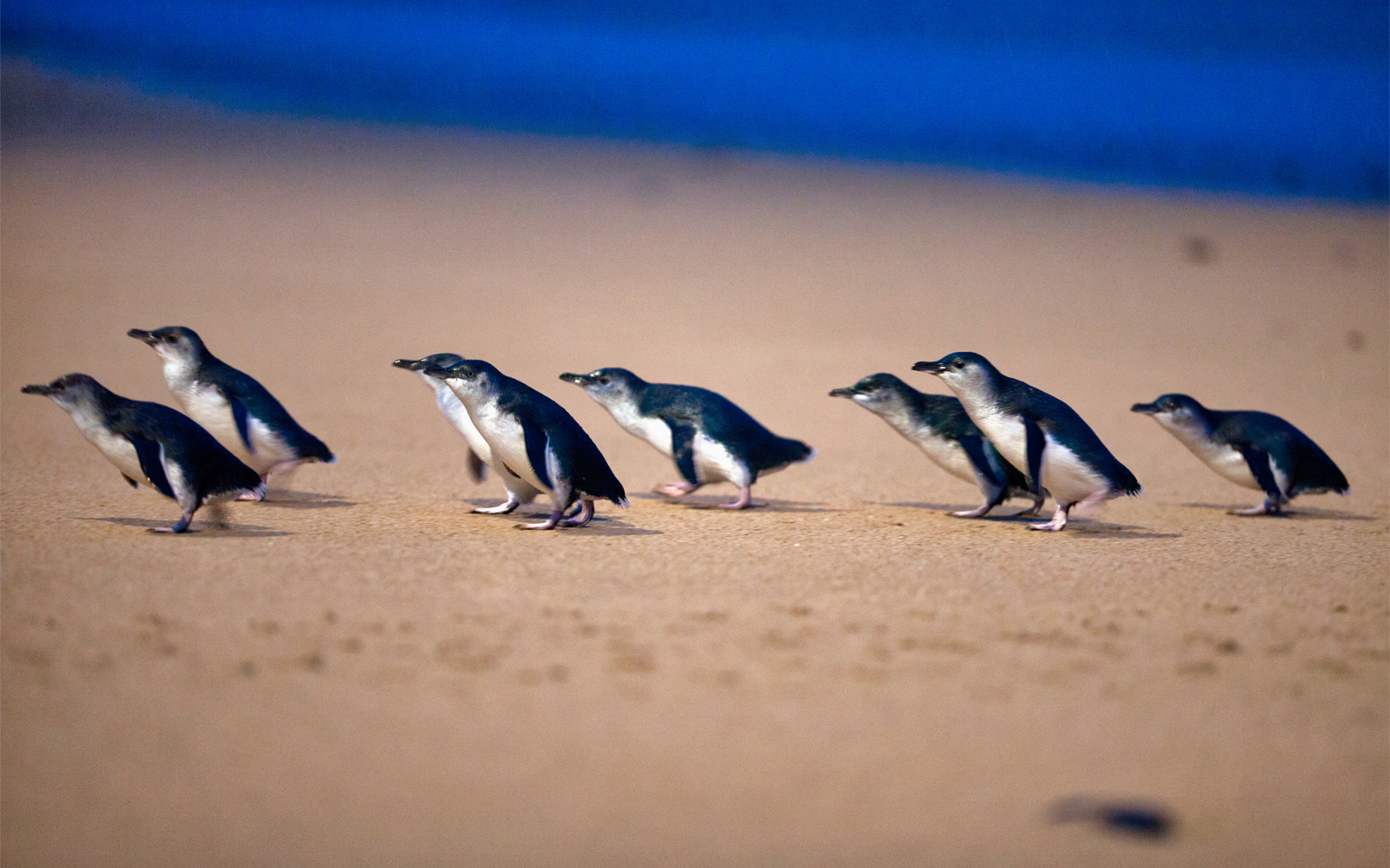 Melbourne To Phillip Island Tour: A Complete Guide For A Perfect Day Trip