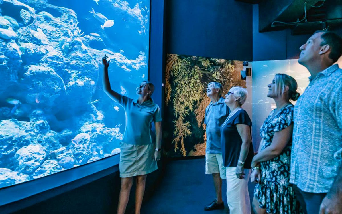 marine life encounter at cairns aquarium with optional lunch-1