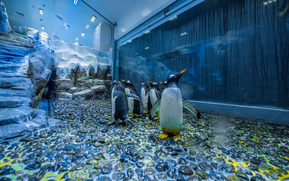 dubai aquarium & underwater zoo - penguin cove tickets-1