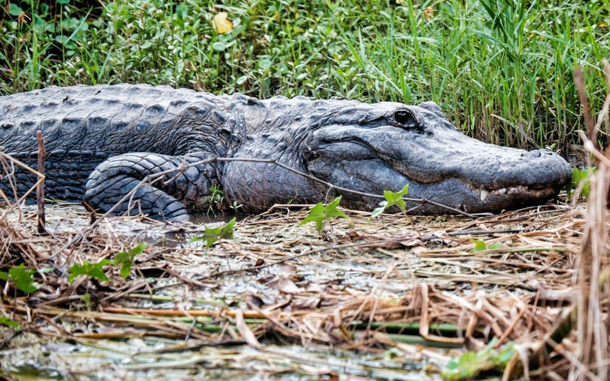 everglades tour with transfers from miami-1