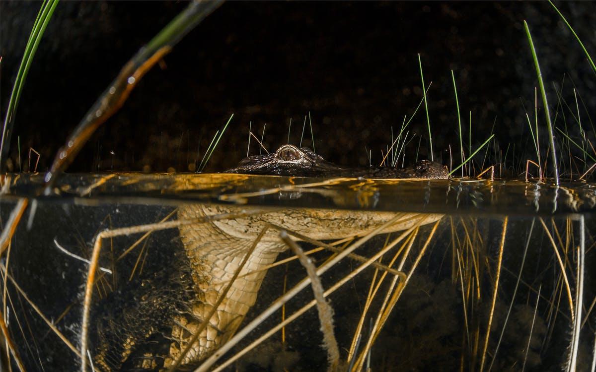 sawgrass recreaion park: airboat ride at night -0