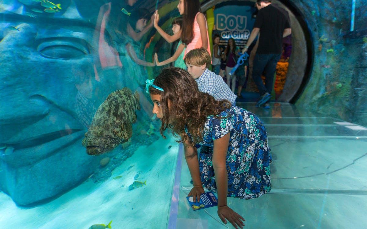 sea life orlando : admission tickets-0