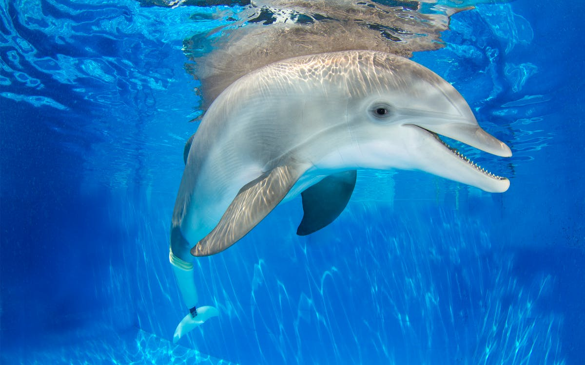 the dolphin encounter tour and clearwater beach tour-1