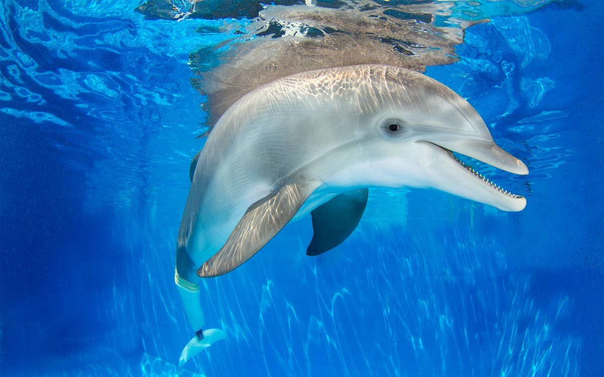 winter the dolphin experience in clearwater beach-0