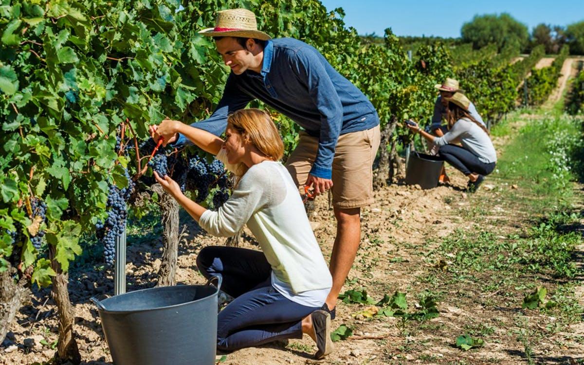 el penedès hike & wines tour-1