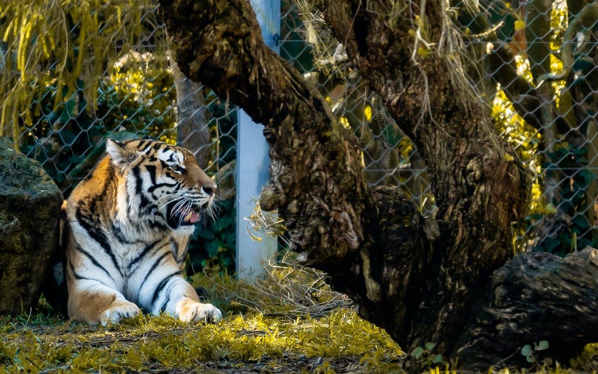 jardim zoologico tickets-0