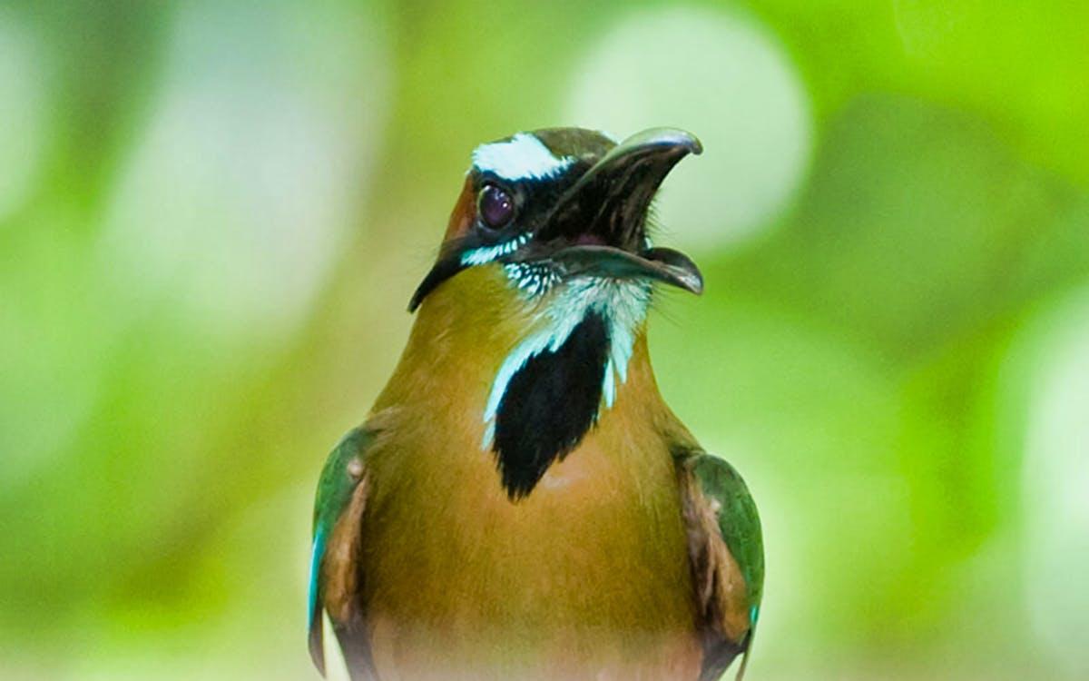 cancun bird watching guided tour-1