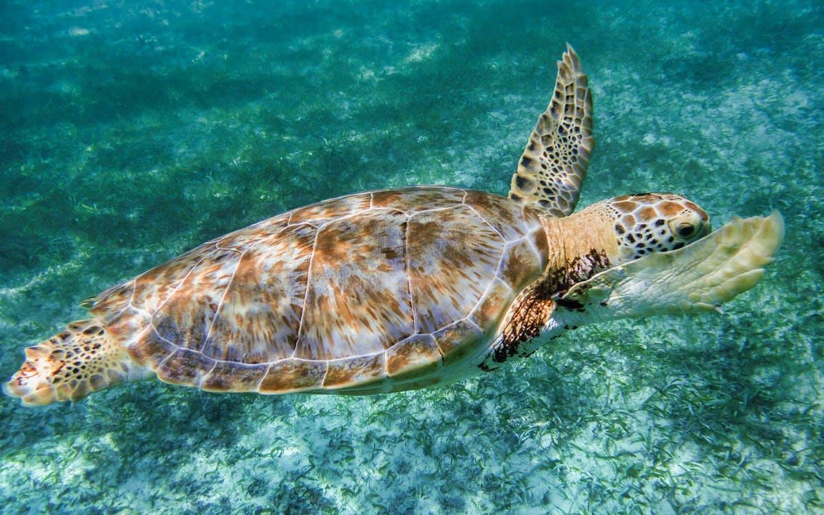 swin with sea turtles in cancun-0